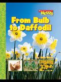 From Bulb to Daffodil