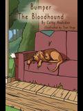 Bumper the Bloodhound
