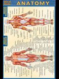 Anatomy - Pocket-Sized Reference Guide (4 X 6)