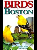 Birds of Boston