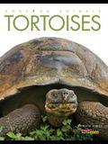 Amazing Animals: Tortoises
