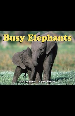 Busy Elephants