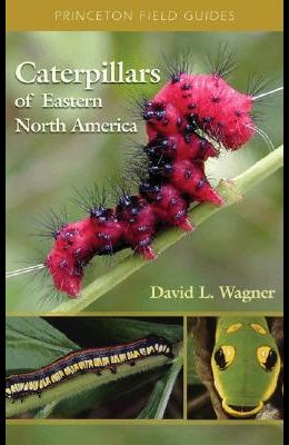 Caterpillars of Eastern North America: A Guide to Identification and Natural History
