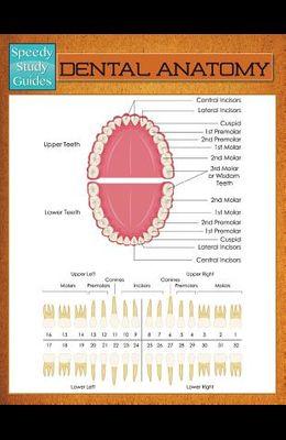 Dental Anatomy (Speedy Study Guide)