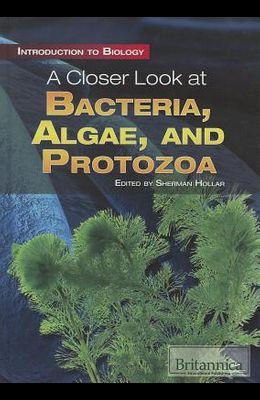 A Closer Look at Bacteria, Algae, and Protozoa