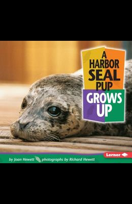 A Harbor Seal Pup Grows Up